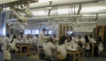 Students Teaching In The Lab