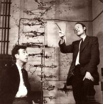 watson-and-crick-1953